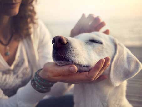 5 Things You Can Do to Decrease Your Pet's Stress