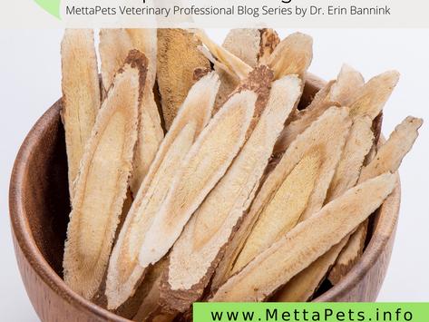 Canine Splenic Hemangiosarcoma: The Science Behind Astragalus-Containing Formulas