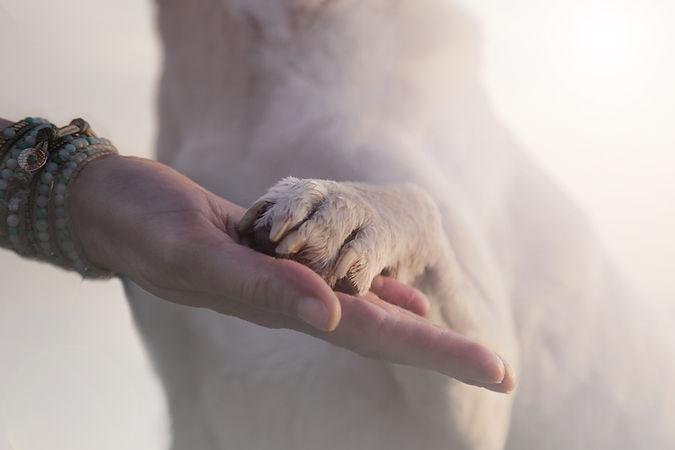 dog paw and human hand.jpg