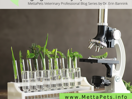 Potential Role of Chinese Herbal Medicine in Managing Canine Lymphoma Patients: Introduction