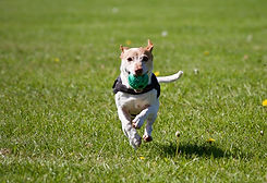 dog running with ball_edited.jpg