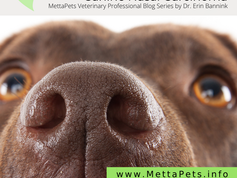 Canine Nasal Carcinoma: Herbal Therapy Options for Patient Management and Case Series Survival Times