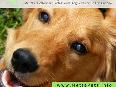 Canine Splenic Hemangiosarcoma: Xiao Chai Hu Tang and Related Formulas