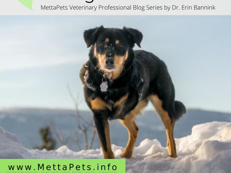 Integrative Palliative Management of Canine OSA Patients