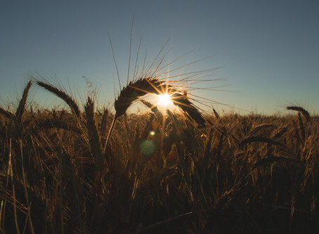 Grains: What's the big deal?