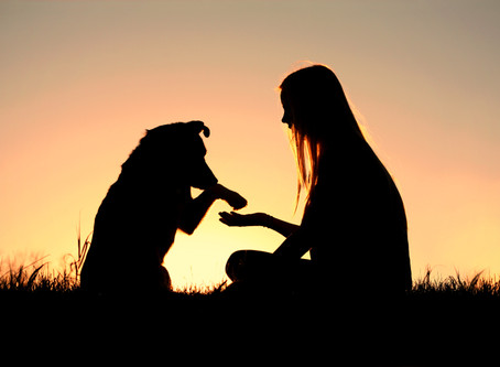 3 Things You Can Do to Decrease Toxin's in your Pet's Environment