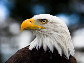 american-eagle-day1.jpg