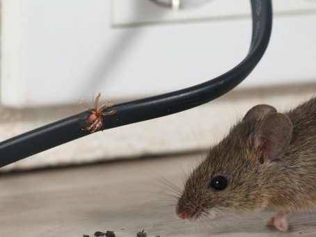 Should Your Mouse be Wireless?