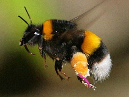 Have you tried turning your Bumblebee off and back on again?