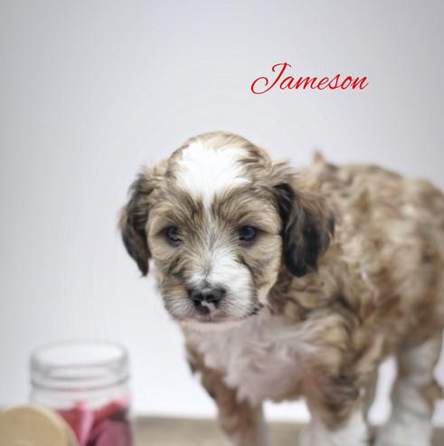 jameson 52.JPG