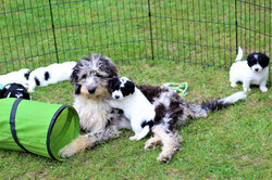 fern with puppies