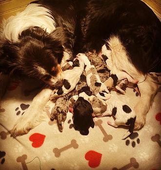 jessie m litter newborn.jpg