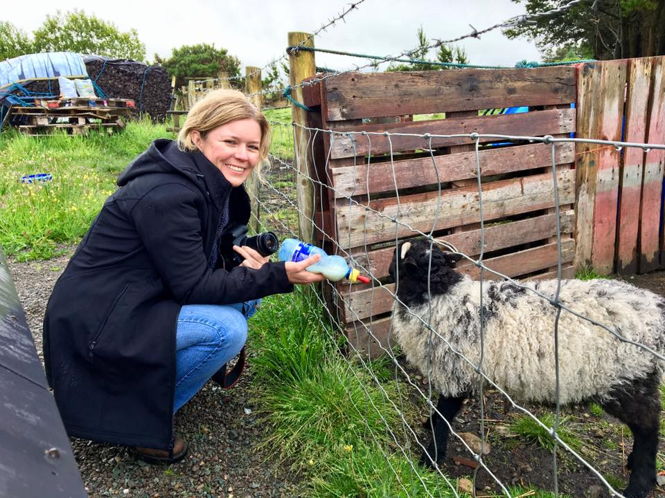 Meeting Lolly the Lamb