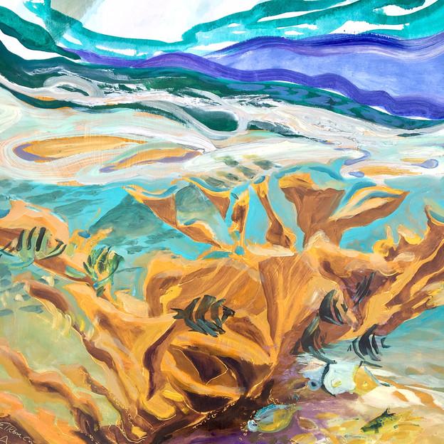Elkhorn Coral: Critically Endangered