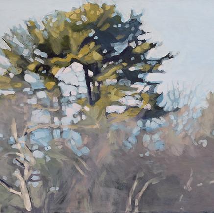 Liz Hoag Beach Undergrowth