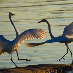 """Chelsea Zhao """"Dancing Birds"""""""