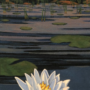 Floating Lily II