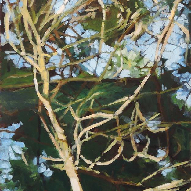Pine Tangle