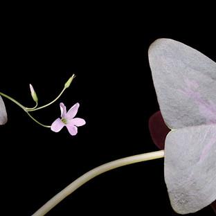 Love Plant