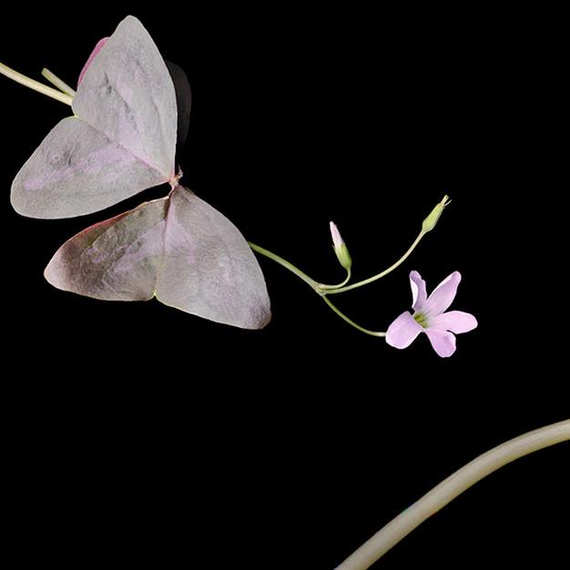 Joyce Tenneson, Love Plant