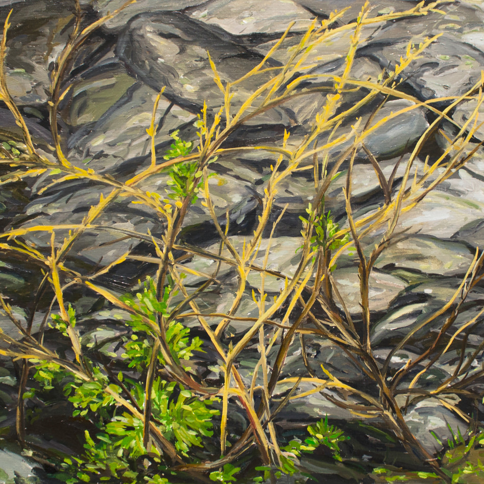 Stone Wall and Brambles