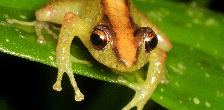 SV_frog