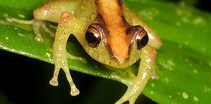 SV_frog.jpg