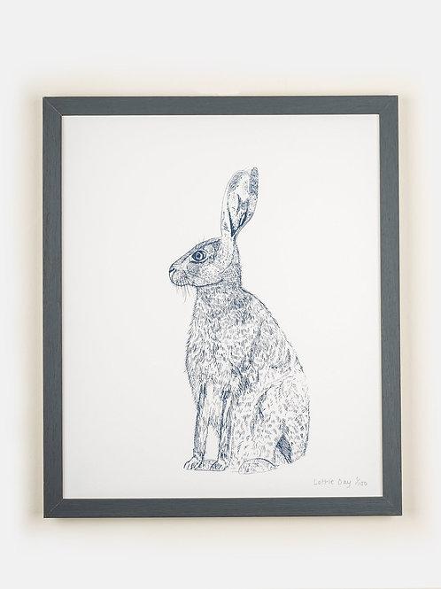 Blue Hare Framed Print