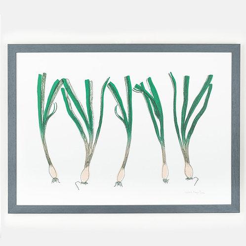 Spring Onion Garden Vegetable Framed Print
