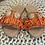 Thumbnail: Primadonna - Celeste Schlappen mit Muscheln Orange