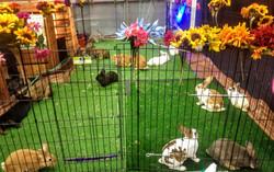 Bunny Lounge