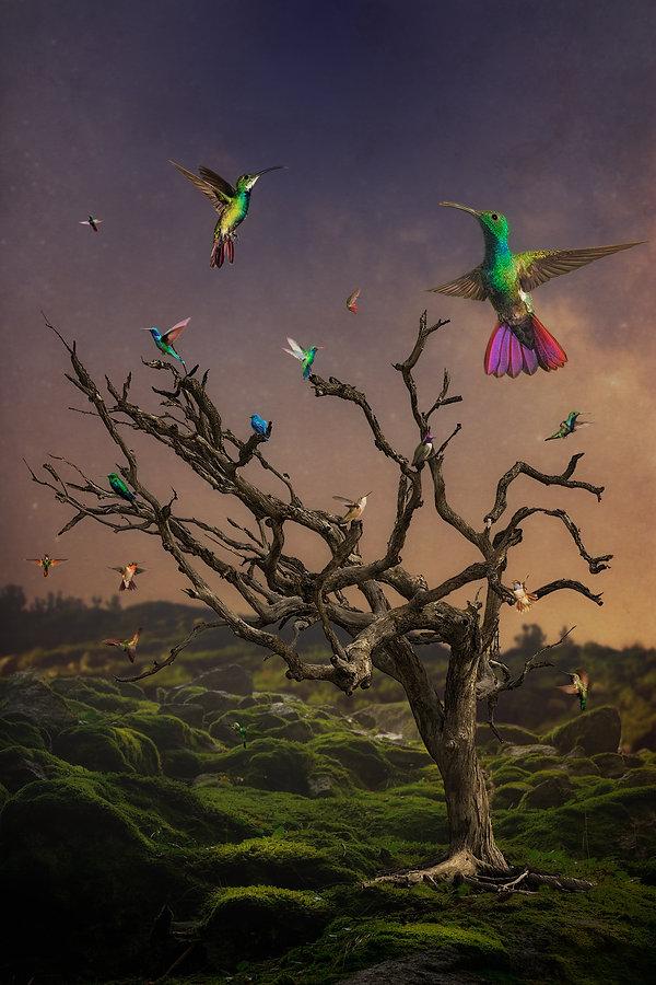 Kolibris.jpg