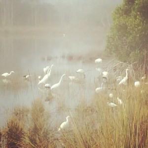 Photo Credit: Carrie Robinson - Early Birds Naples Botanical Gardens
