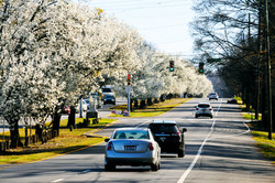 Springtime on Crestwood Blvd.