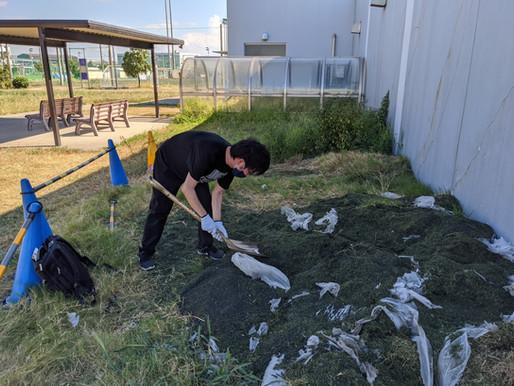 人工芝の回収