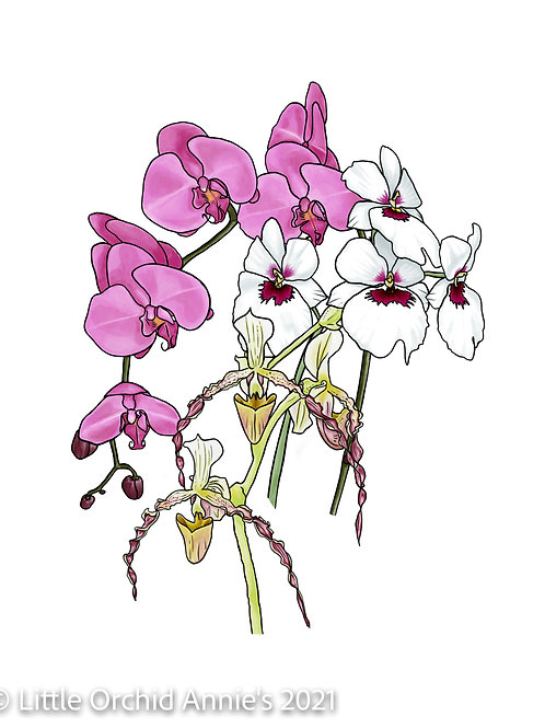 Orchids in Bloom 11x14 Print