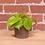 Thumbnail: Philodendron cordatum 'Lemon'
