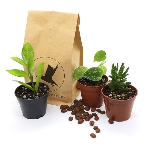 Coffee + Plant Box Subscription