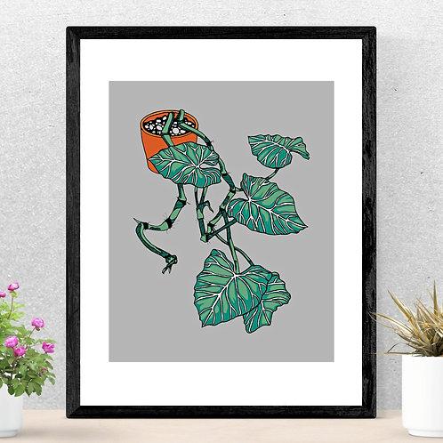 Philodendron gloriosum Print