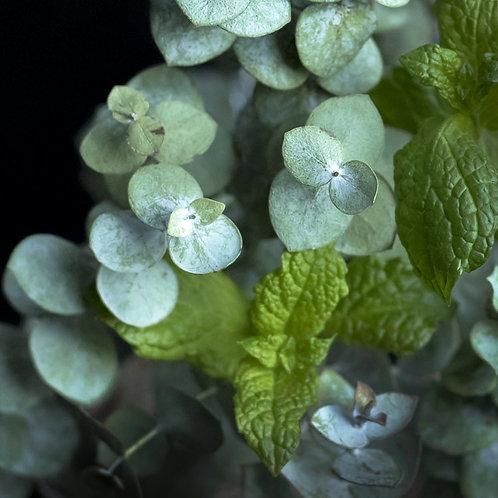 Eucalyptus + Mint