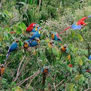 faune-amazonie-ara-colombie-decouverte.jpg