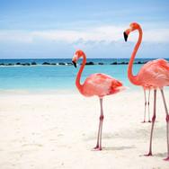 flamingos-guajira-tourism-colombia.jpg