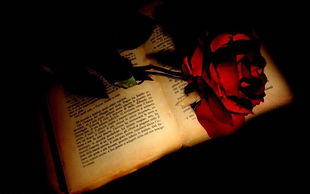Red-Rose-On-A-Book-779605.jpg