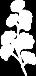 fleurs1-blanc-HD.png