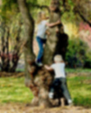 Two children climbing a tree.jpg