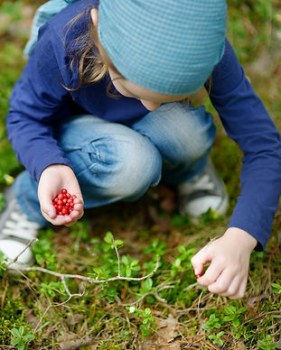 Adorable girl picking foxberries in the