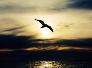 seabird-768584_1920.jpg