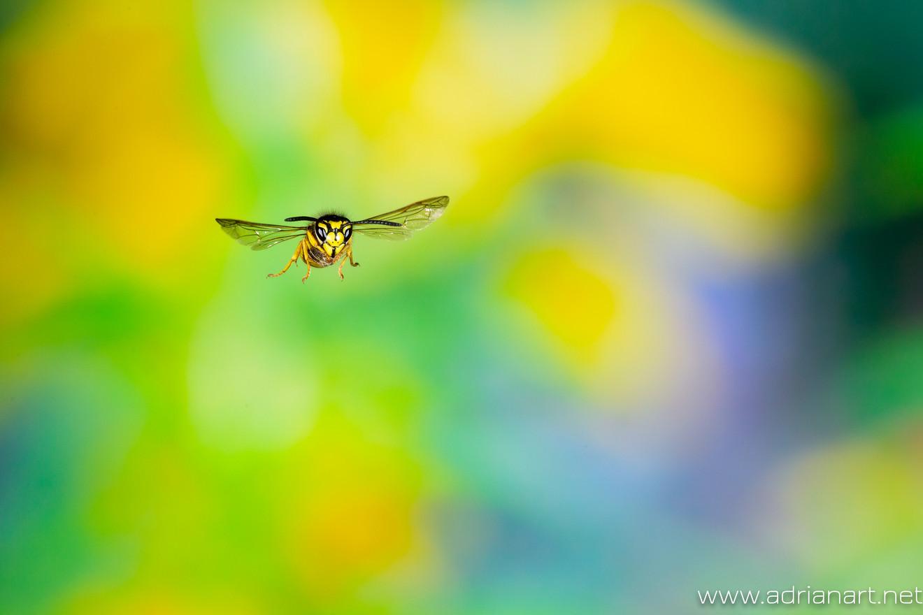 Fotowettbewerb Naturfotografen Schweiz 2019