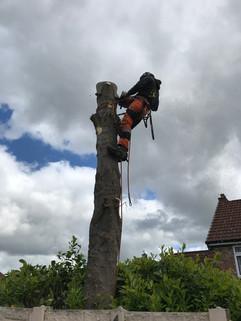 Tree Surgeon Wigan