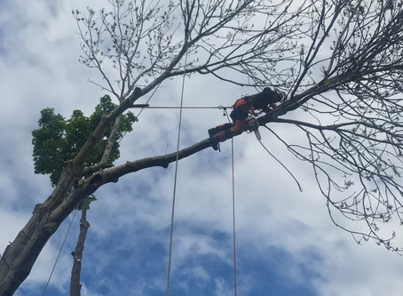 What is a tree surgeon ?